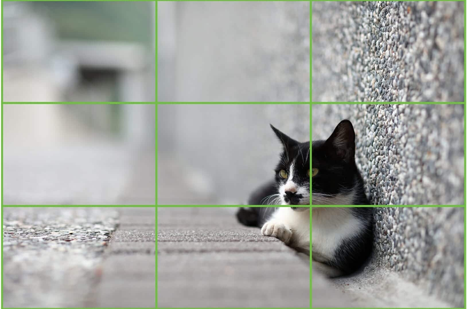 Improve Your Photos with the Rule of Thirds