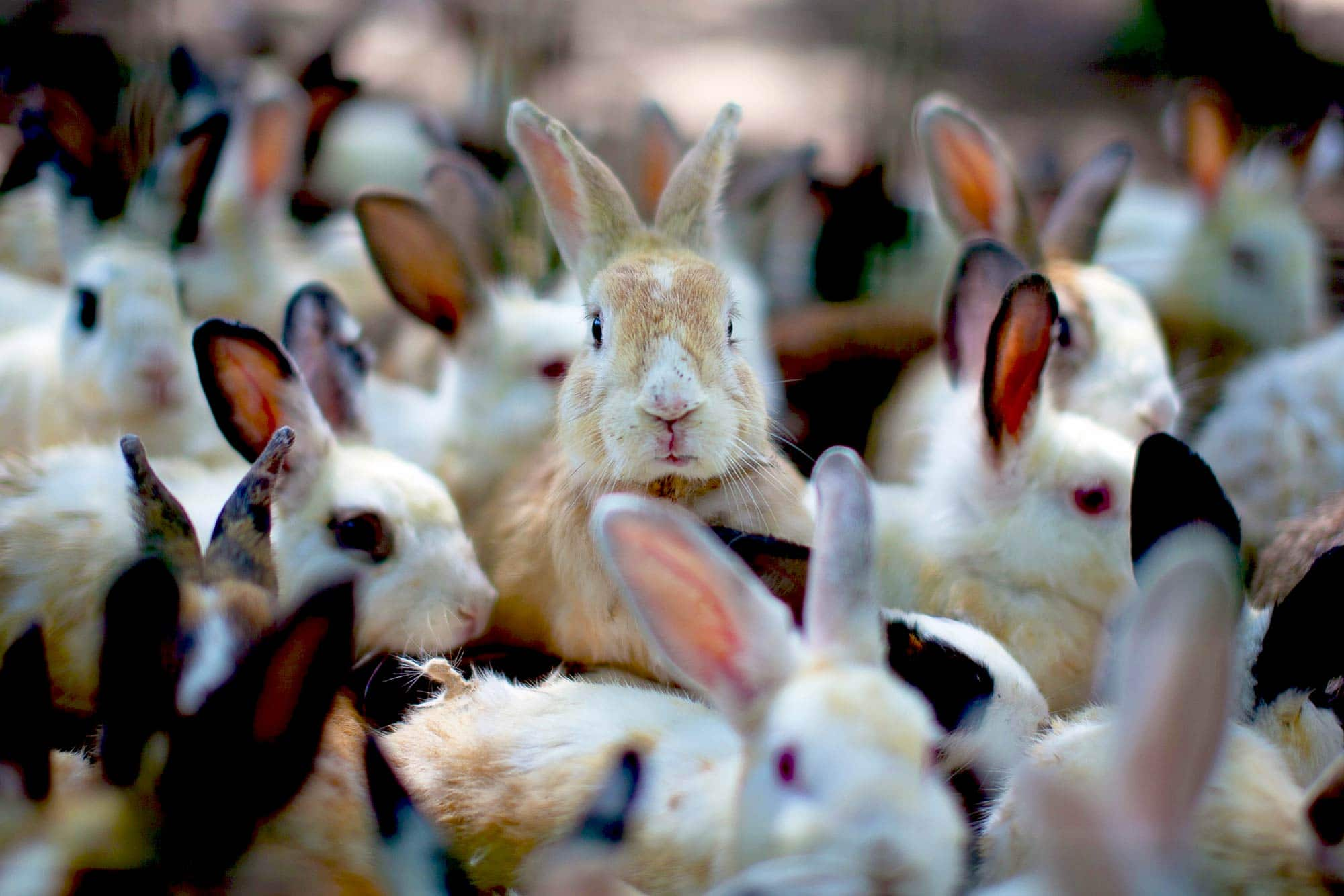 Keep Your Backup Appliances From Multiplying Like Rabbits