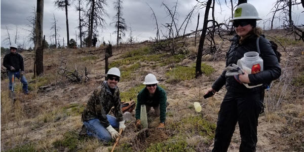 In Colorado's Black Forest Regional Park, Western Digital volunteers connect with Mother Earth by planting trees.