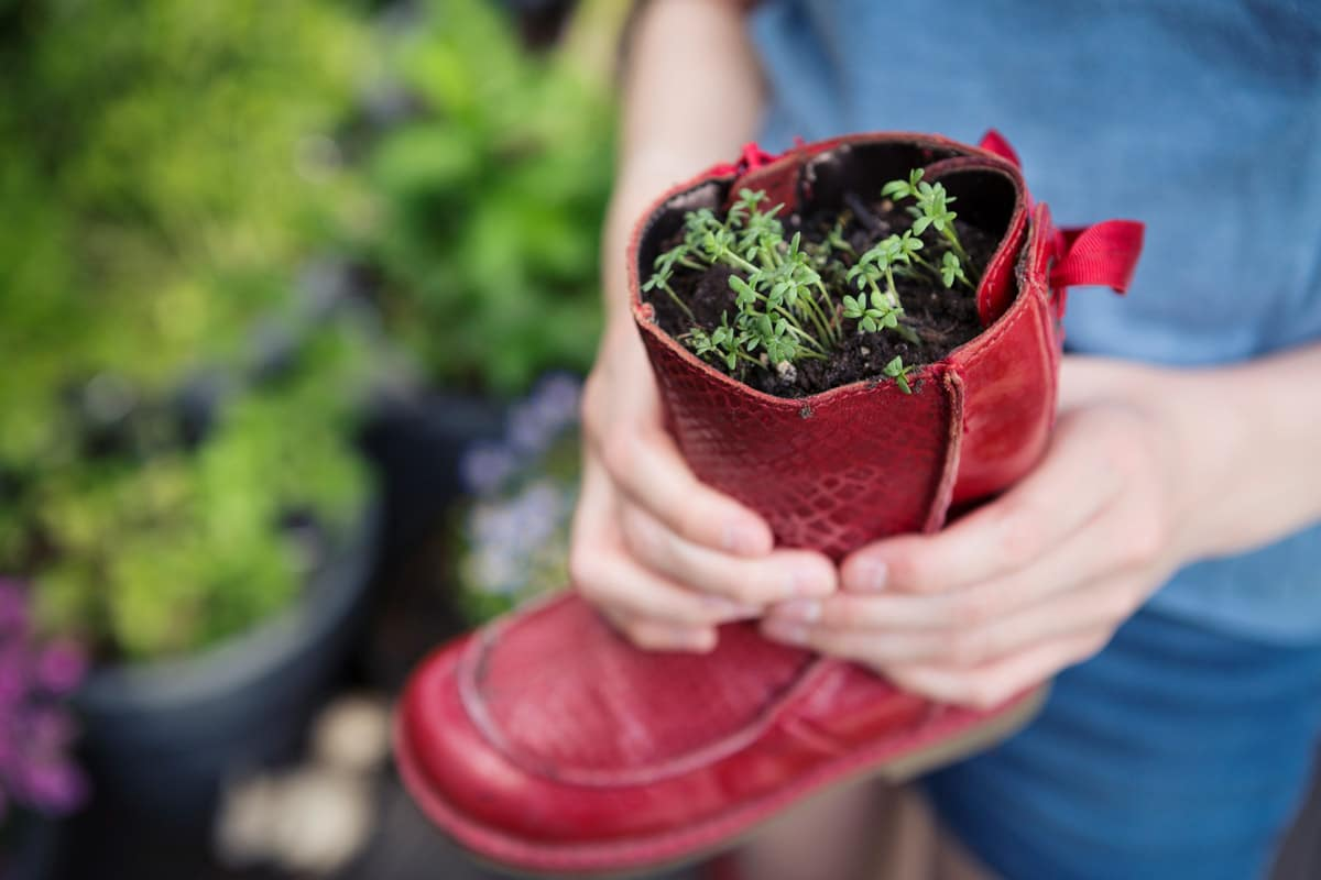 A pair of hands grasp a red boot repurposed as a plant potter for Earth Day.